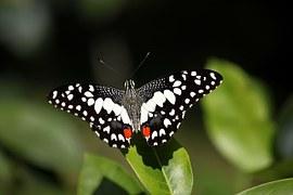 butterfly-214816__180[1]
