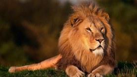 LÖWE * LION