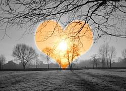 heart-590222__180[1]
