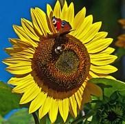 butterfly-407596__180