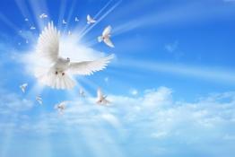 Holy spirit dove flying in the sky