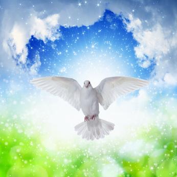 Holy Spirit came down like white dove, holy spirit dove flies in blue sky, bright light shines from heaven, gospel story - White dove flies in skies