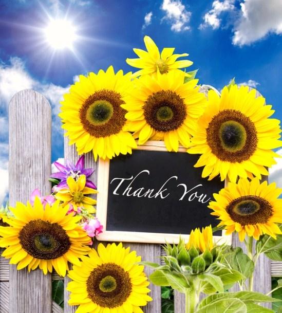 Herzlichen Dank - Sonnenblumen :)